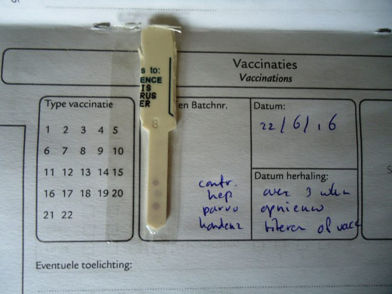Foto 3: Titerstaaltje van een zes weken oude pup, de foto hierboven geeft de titerbepaling van de moeder van deze pup weer. De onderste drie stippen geven weer welke antilichamen de pup van haar moeder heeft meegekregen en ondanks dat de moeder van deze pup drie jaar geleden voor het laatst was gevaccineerd beschikte zij aantoonbaar over ruim voldoende antilichamen en zij gaf haar pups dus ook een uitstekende maternale immuniteit mee. De onderste stip is nog net zichtbaar, maar de parvo is nog erg hoog. Omdat de parvostip het ijkpunt is, was vaccineren nog niet zinvol en werd het advies gegeven om drie weken later opnieuw een titerbepaling te doen.