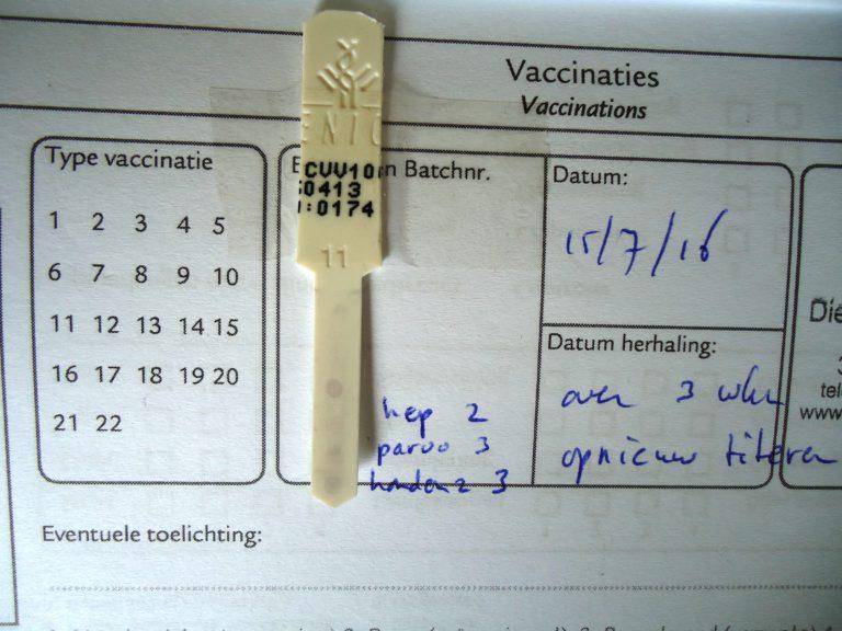 Foto 4: Titerstaaltje van dezelfde pup, nu drie weken later. Omdat de parvostip nog steeds donker genoeg was, was het ook op de leeftijd van 9 weken niet zinvol om al te vaccineren.